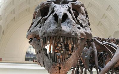 Descubrimiento de un nuevo dinosaurio.
